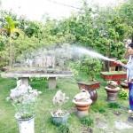 """Bật mí những """"bí mật"""" của các loại cây hút khí độc trong nhà"""