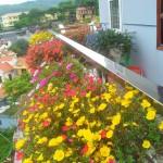 Trước đây, trong vườn nhà chị cũng từng có rất nhiều loại hoa đẹp như phong lữ thảo, dạ yến thảo, thanh trúc, thanh tú,...