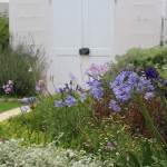 Ở phía sau hàng rào, thực vật ngoại lai và bản địa hòa hợp với nhau để tạo nên một khung cảnh yên tĩnh cho cuộc sống của một gia đình bận rộn